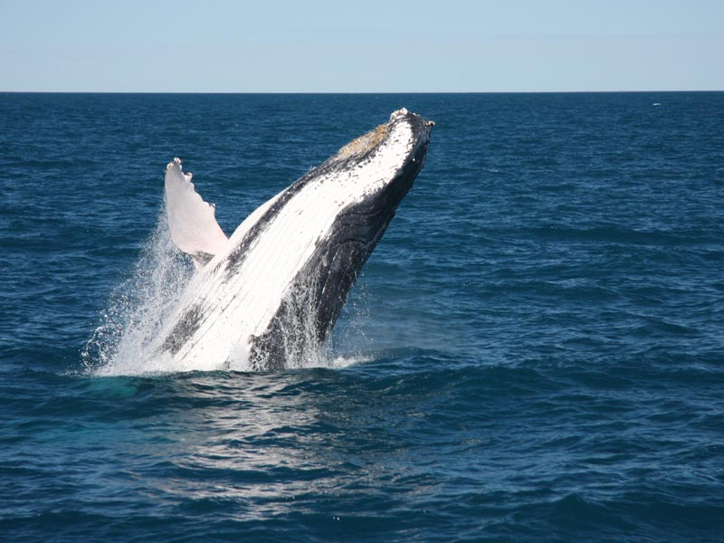 Broome Whale Watching Tours
