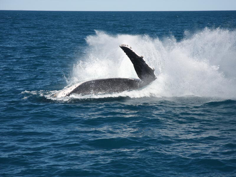 Whale Watching Tours Broome