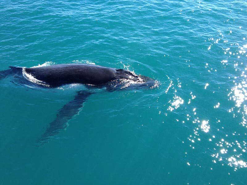 Whale Watching Charters Broome
