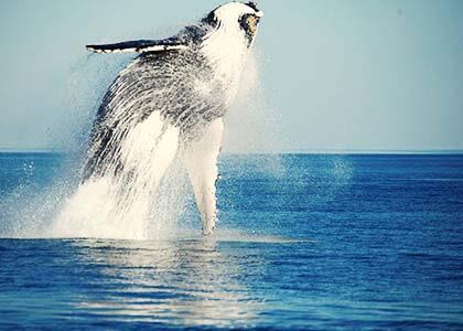 whalewatching_img