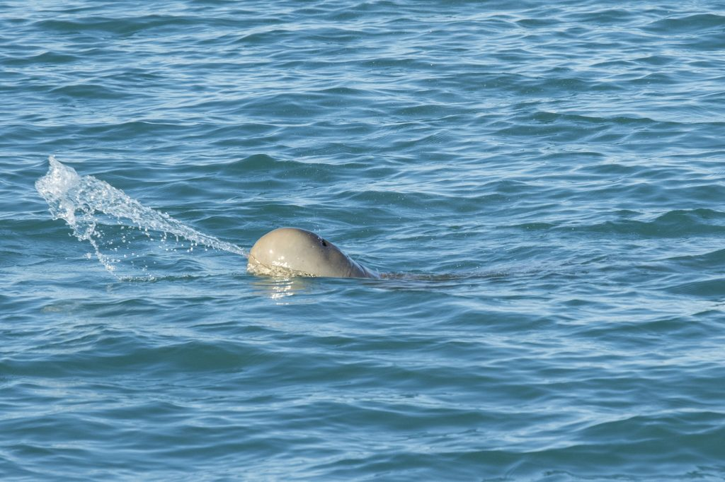 Snubfin Dolphin Cruise - AOC