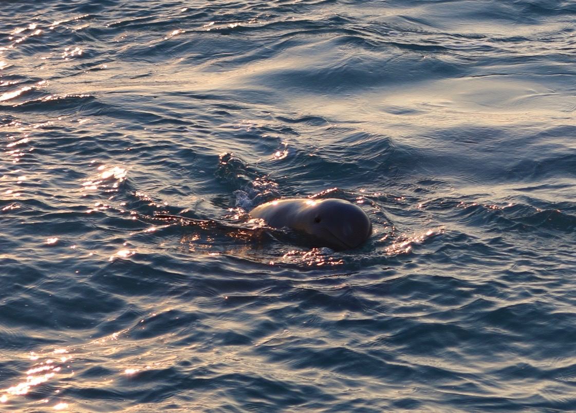 Snubfin Dolphin Cruise