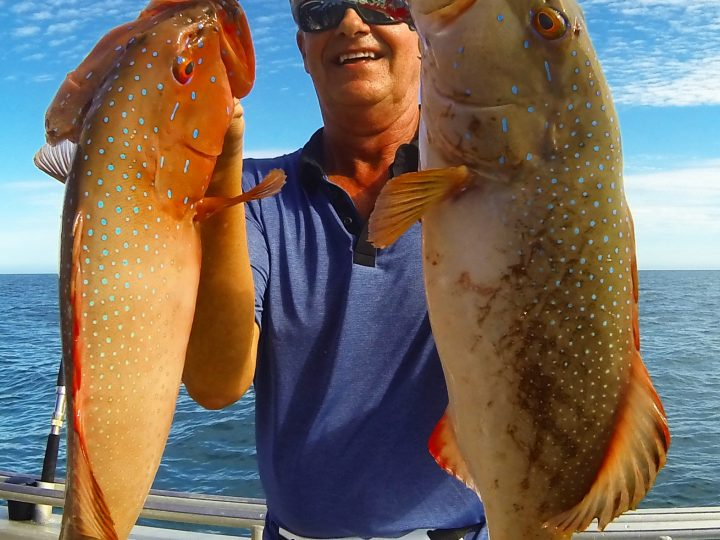 The Coral Trout