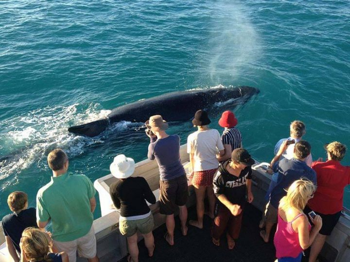 Broome Whale Watching: Interesting facts on feeding