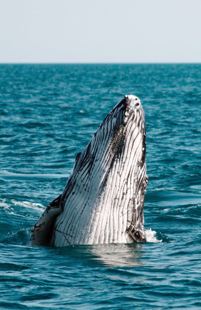 Broome Whale Watching Cruises
