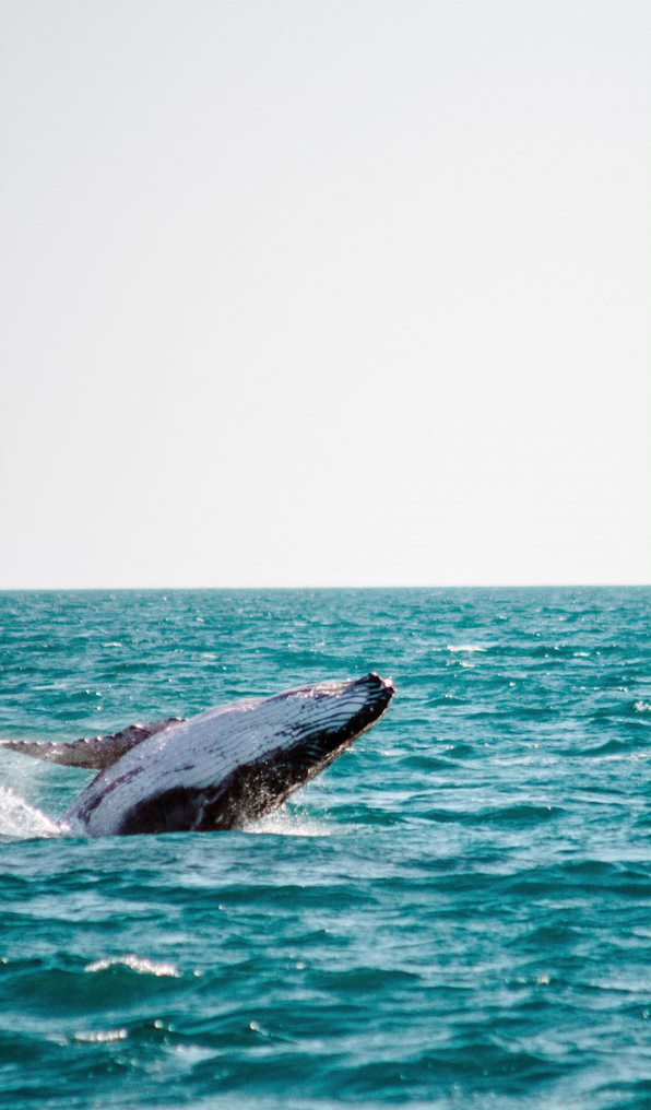 Whales Watching Charters Broome